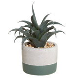 green Carolyn Donnelly Eclectic Mini Aloe In Pot
