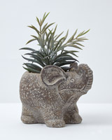 green Carolyn Donnelly Eclectic Succulant In Elephant