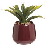 purpleCarolyn Donnelly Eclectic Aloe In Pot