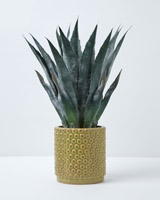 mint Carolyn Donnelly Eclectic Large Aloe In Pot