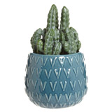 teal Carolyn Donnelly Eclectic Cactus In Glazed Pot