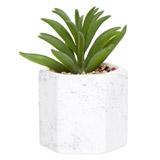 greenAloe Vera In Pot