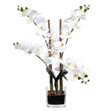 whiteOrchid In Glass Vase