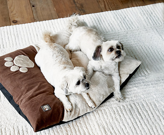Pet Beds & Accessories Home