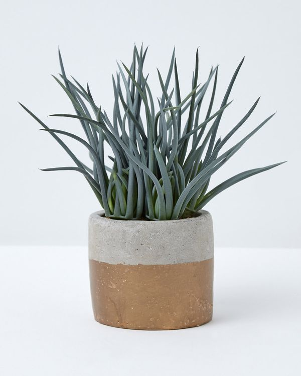 Carolyn Donnelly Eclectic Chive Potted Plant