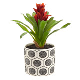 red Carolyn Donnelly Eclectic Bromeliad Plant