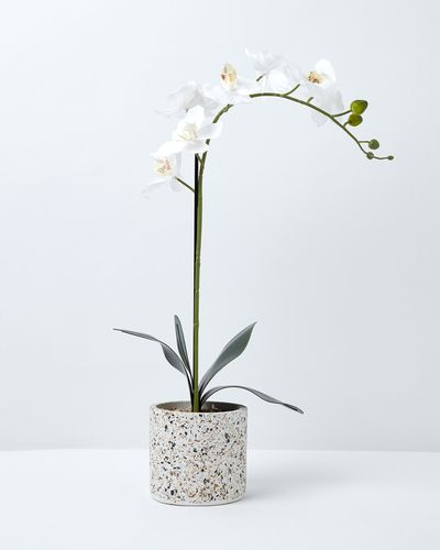 Carolyn Donnelly Eclectic Orchid In Terazzo Pot