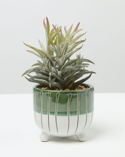 Carolyn Donnelly Eclectic Plant In Footed Pot