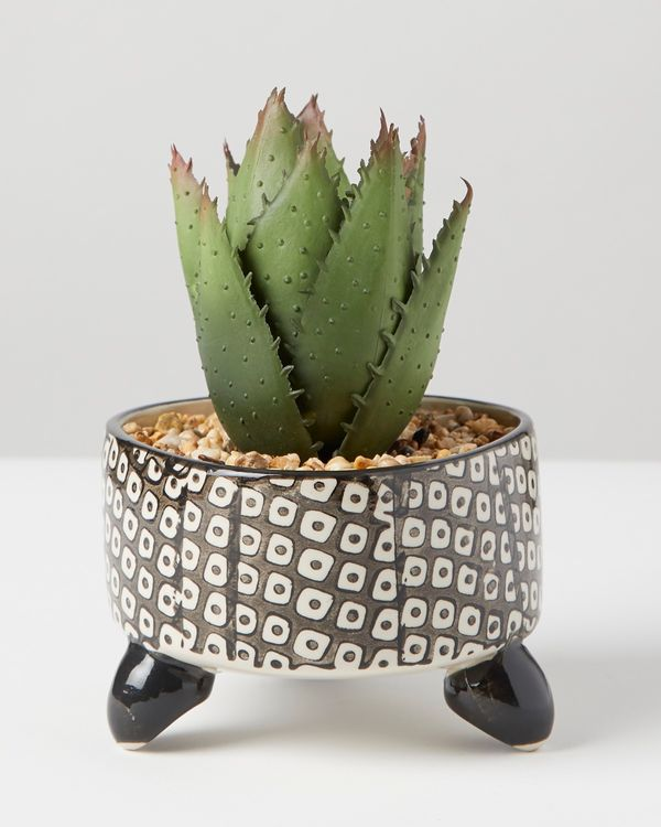 Carolyn Donnelly Eclectic Aloe In Geo Pot