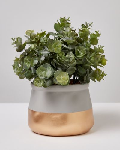 Carolyn Donnelly Eclectic Plant In Gold Pot