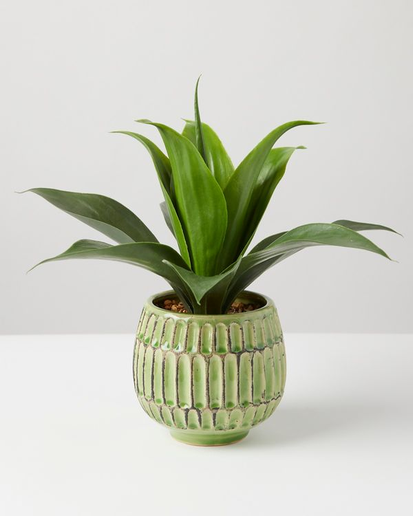 Carolyn Donnelly Eclectic Plant In Green Pot