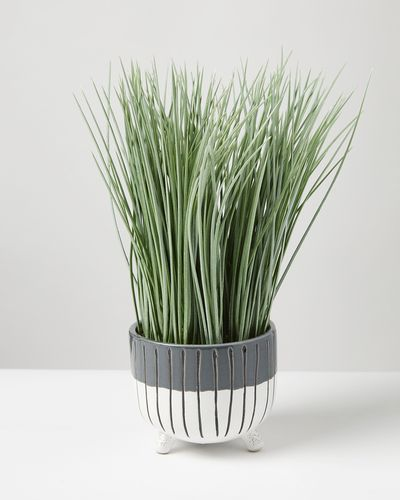 Carolyn Donnelly Eclectic Grass In Footed Pot