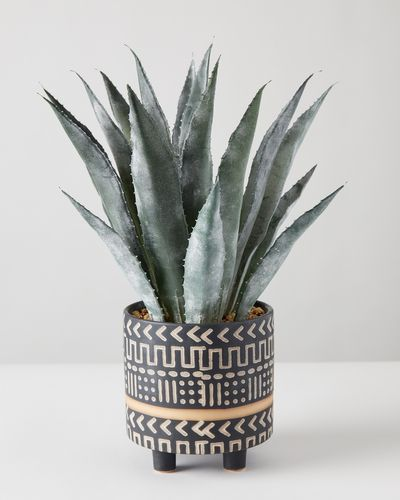Carolyn Donnelly Eclectic Plant In Geo Pot