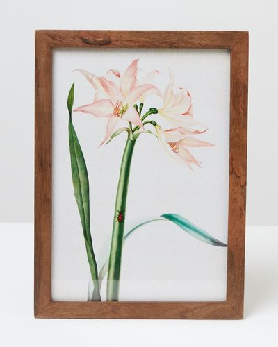 Carolyn Donnelly Eclectic Floral Wall Art