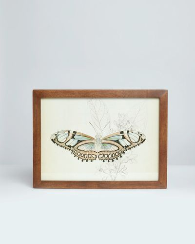 Carolyn Donnelly Eclectic Butterfly Wall Art