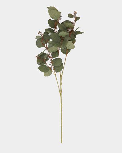 Paul Costelloe Living Eucalyptus Seeds Spray thumbnail