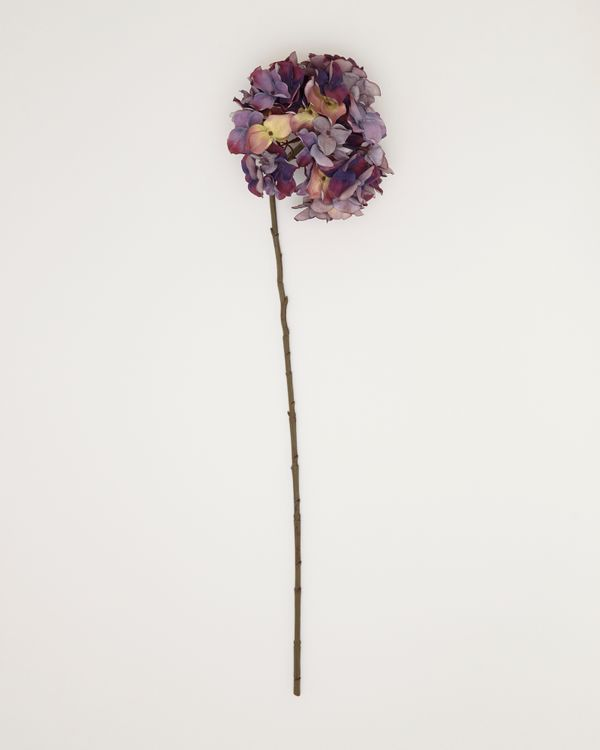 Paul Costelloe Living Tall Hydrangea