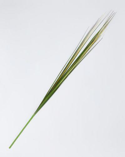 Paul Costelloe Living Grass Spray