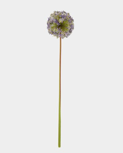Paul Costelloe Living Allium Artificial Flower Spray thumbnail