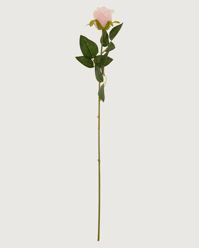 Small Rose Stem