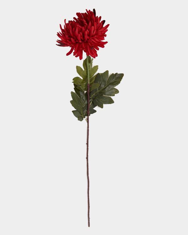 Small Chrysanthemum Stem