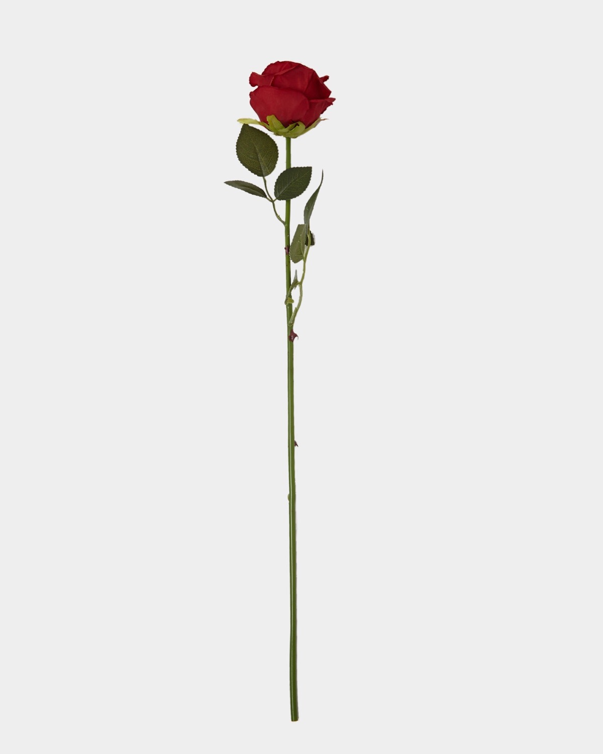 Dunnes Stores Red Single Rose Stem