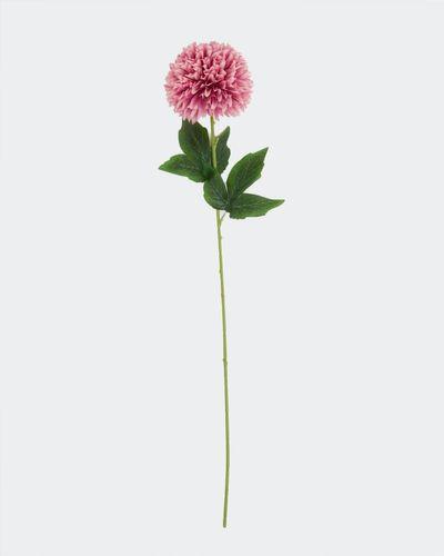 Chrysanthemum Stem thumbnail