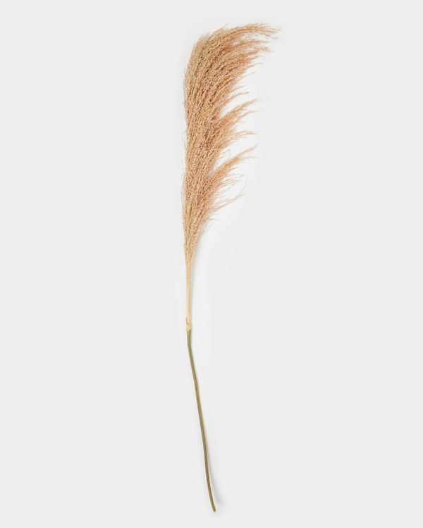 Natural Pampas Grass
