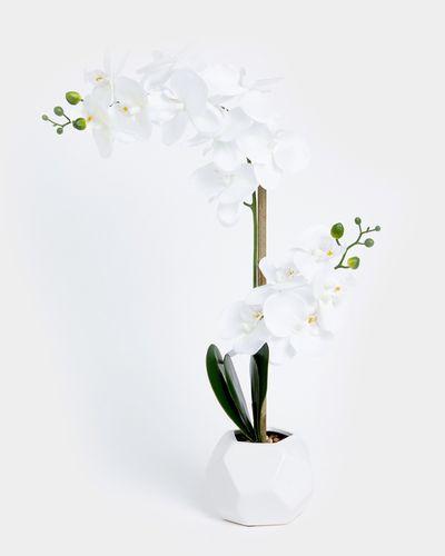Orchid Geo Pot