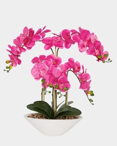 Potted Orchid thumbnail