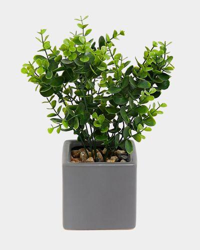 Eucalyptus Square Pot