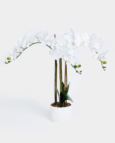 Orchid Cross Pot Design