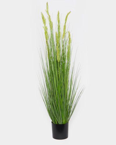 XL Grass Pot