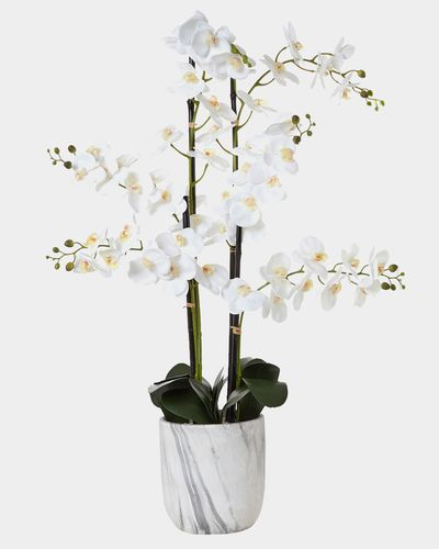 Extra Large Marble Orchid