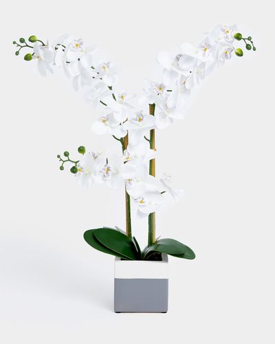 Orchid In A Square Pot