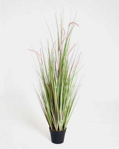 XXL Onion Grass