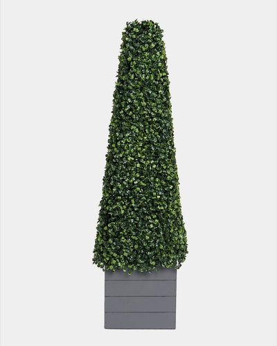 Cone Topiary In Wood Box thumbnail