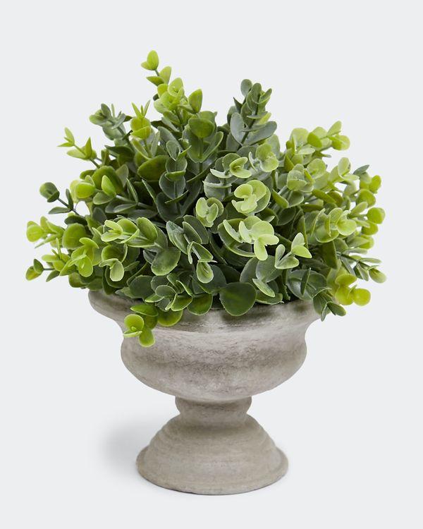 Eucalyptus Stand Pot