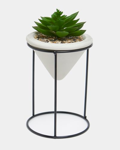 Succulent On Stand